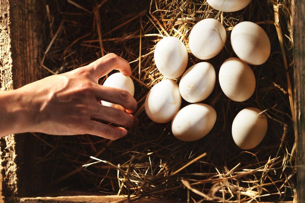 frische Eier vom Gut Boltenhof