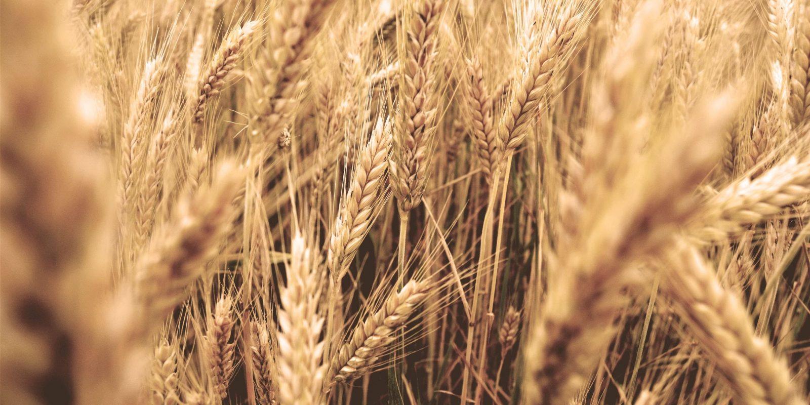 Kornwiese - Land&Gut alle Informationen über Landwirtschaft auf dem Gut Boltenhof